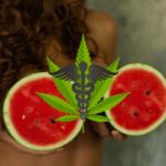 Hälften av bröstcancer patienter använder cannabis