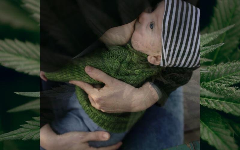 Bröstmjölk när man använder cannabis påverkar inte barnens kortsiktiga hälsa