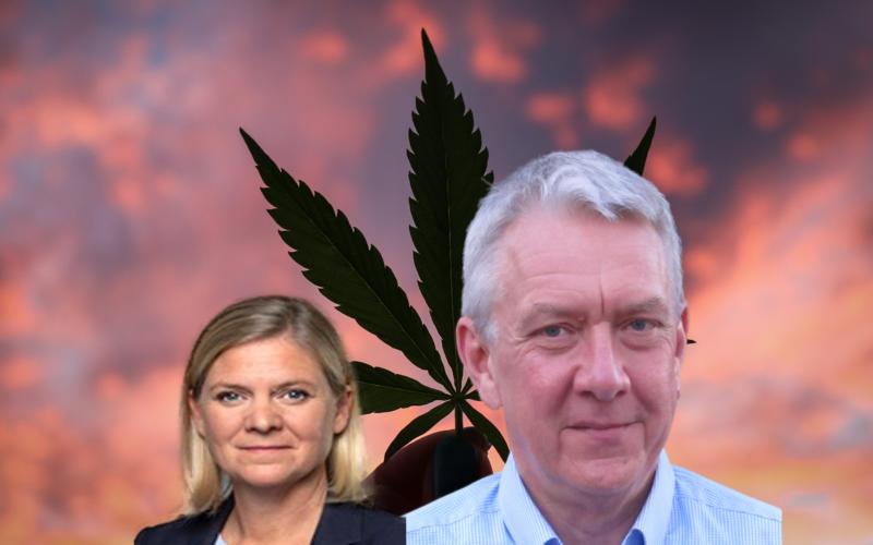 Marijuanarökande Magdalena Andersson borde förstå narkotikagängens ekonomi bättre